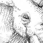 """dessin festival du livre """"enfin livre"""" - mine de plomb"""