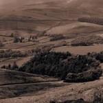 mini site Taranie - Vinovalie - les vignerons d'Ovalie